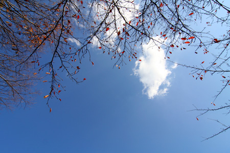 秋から冬へ その1