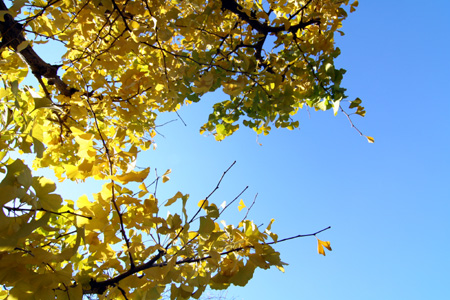 秋から冬へ その2