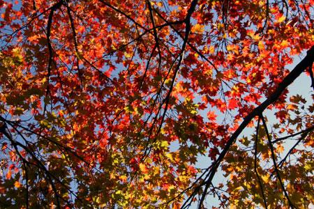 秋から冬へ その3