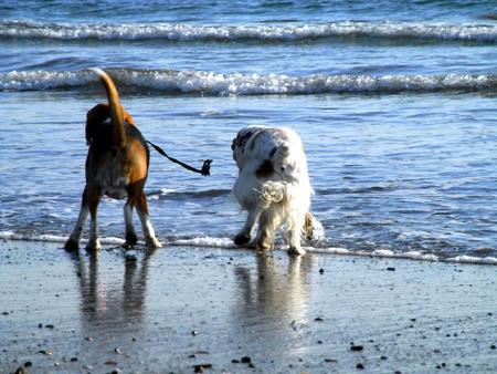 海で遊ぶ若葉と杏