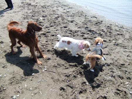 海で遊ぶイヌコたち