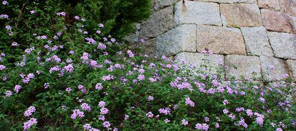 神戸異人館のお庭