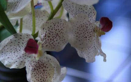 診療所の花