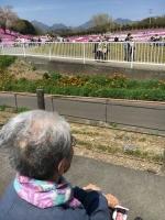 H28 芝桜