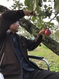 H28 りんご狩り�