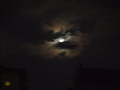 秋中の名月