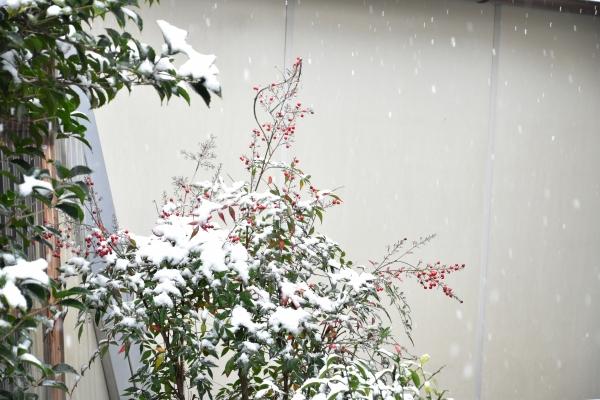 2019-02-11 雪の日の後楽園 003.JPG