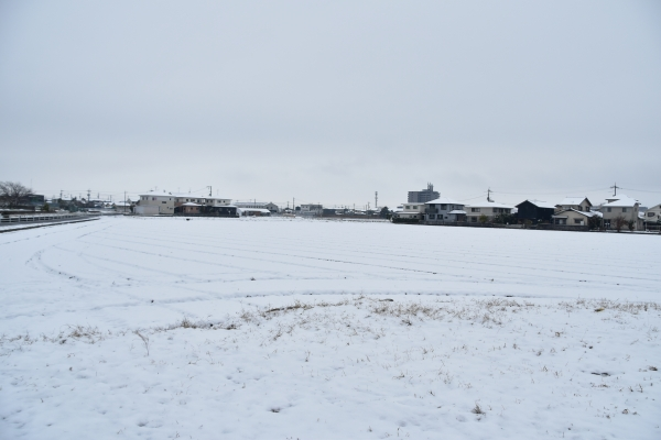 2019-02-11 雪の日の後楽園 057.JPG