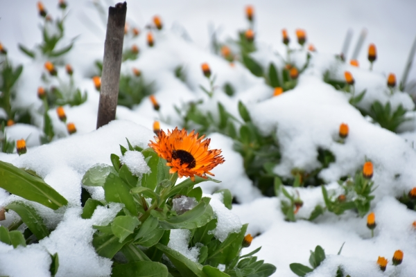 2019-02-11 雪の日の後楽園 102.JPG