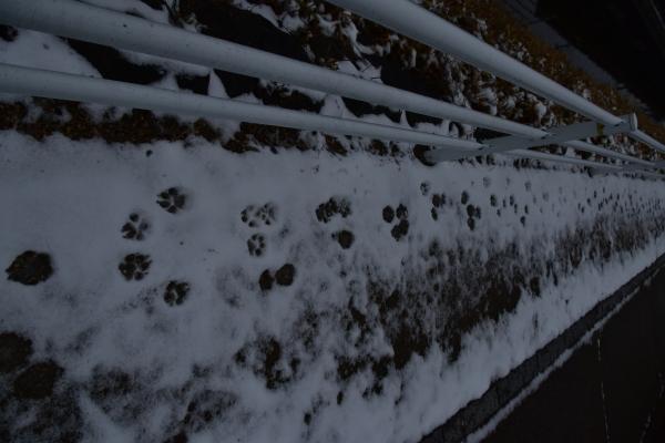 2019-02-11 雪の日の後楽園 145.JPG