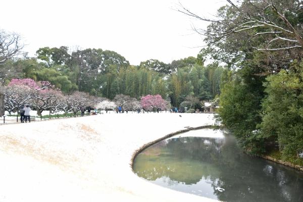 2019-02-11 雪の日の後楽園 248.JPG