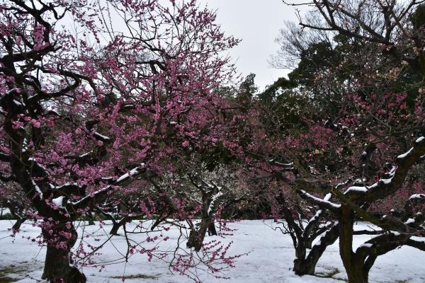 2019-02-11 雪の日の後楽園 309.JPG