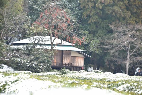 2019-02-11 雪の日の後楽園 381.JPG