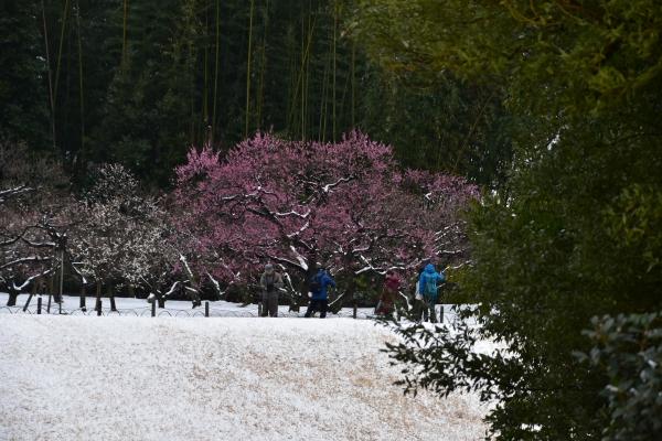 2019-02-11 雪の日の後楽園 237.JPG