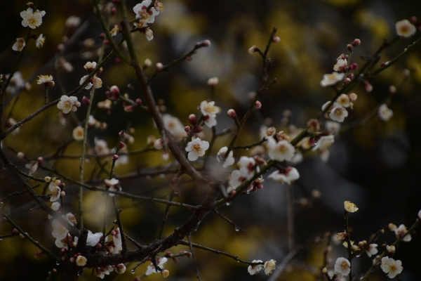 2019-02-11 雪の日の後楽園 256.JPG