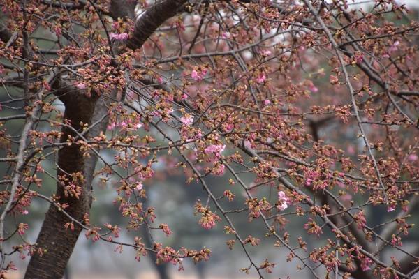2019-02-28 土筆 028 - コピー.JPG