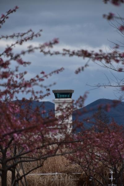 2019-03-04 飛行場公園の河津 010.JPG