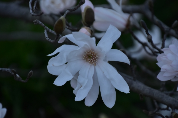 2019-03-22 春の花 003.JPG