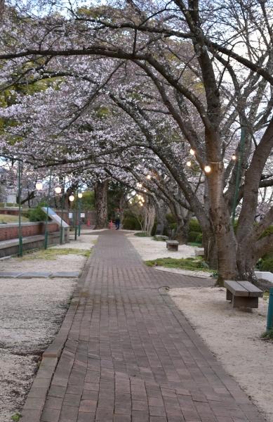 2019-04-01 南輝の桜 503.JPG