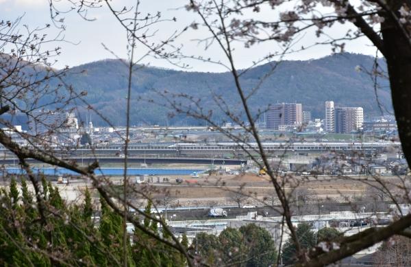2019-04-01 南輝の桜 412.JPG