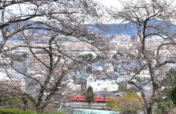 2019-04-01 南輝の桜 475.JPG