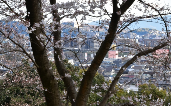 2019-04-01 南輝の桜 405.JPG