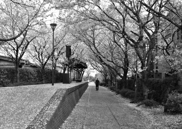 2019-04-11 新保駅と桜 237.JPG