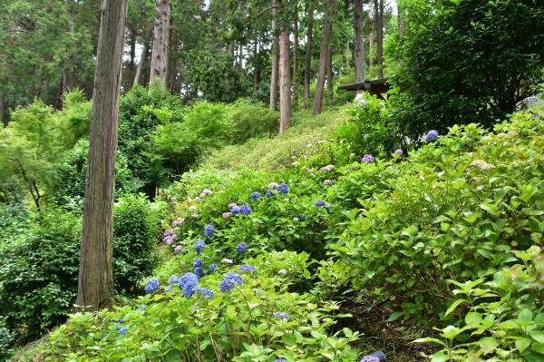 2019-06-16 京都三室戸寺 156.JPG