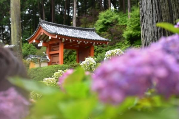 2019-06-16 京都三室戸寺 175.JPG