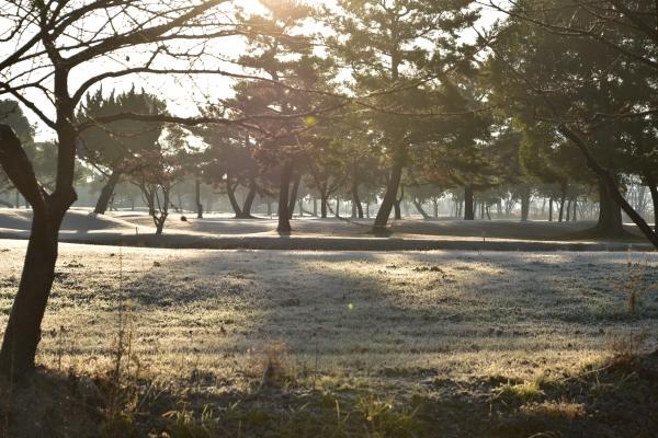 2020-01-06 朝の散歩 016.JPG