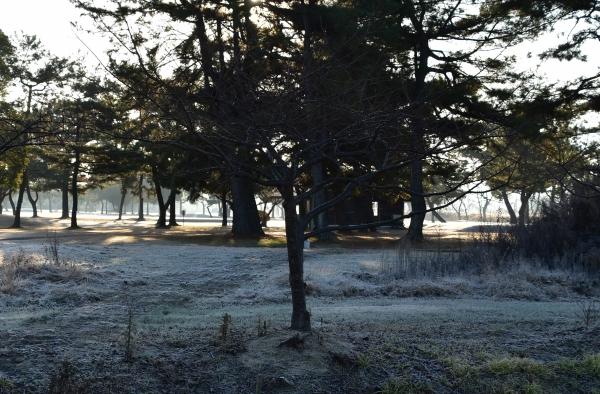 2020-01-06 朝の散歩 026.JPG