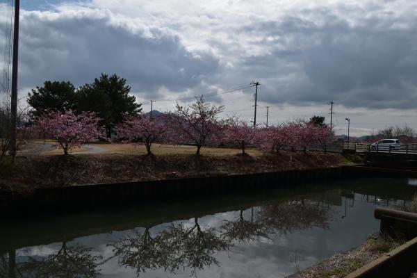 2020-03-01 阿部池 033 - コピー.JPG