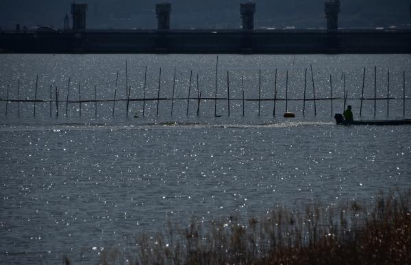 2020-03-12 百間川のカモメ 129.JPG