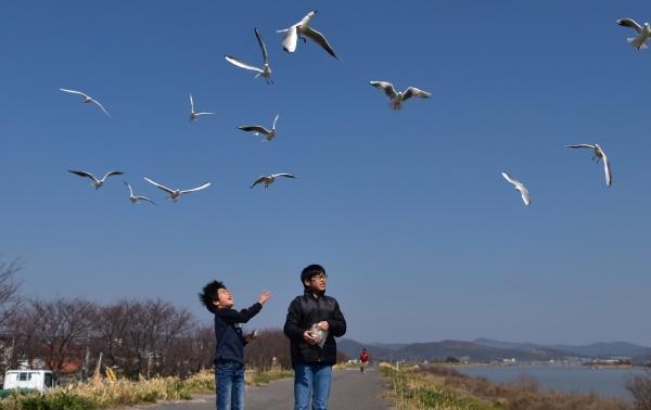2020-03-12 百間川のカモメ 013.JPG