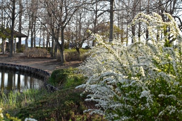 2020-03-23 浦安公園 001.JPG