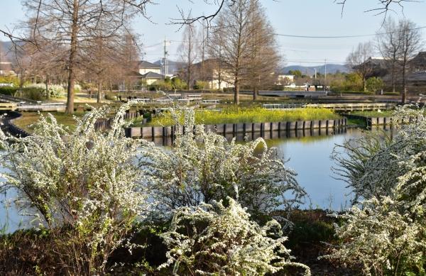 2020-03-23 浦安公園 003.JPG