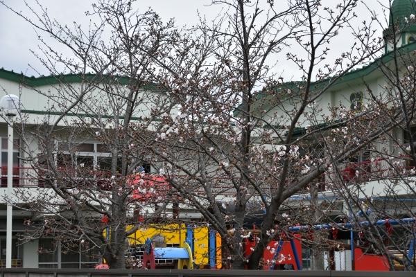 2020-03-28 桜咲く 012.JPG