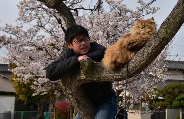 2020-04-03 サクラと僕とネコ 006.JPG