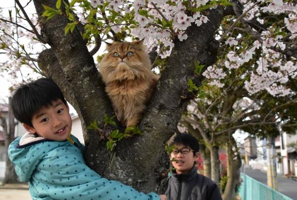 2020-04-03 サクラと僕とネコ 041.JPG