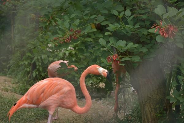 2020-09-14 池田動物園 112.JPG