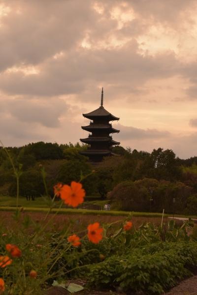 2020-09-20 国分寺五重塔 056.JPG