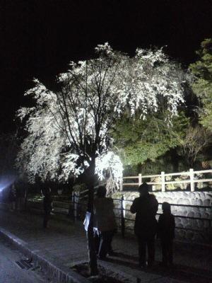 日田市夜桜