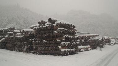 貯木場にも雪どっさり!|日田市上津江の風景、木造りの家フォーユー、津江杉木材流通センター