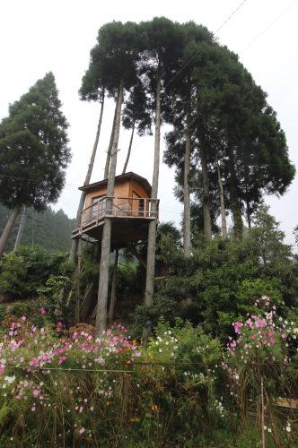 手造りのツリーハウス|大分県日田市中津江町の住まい