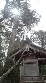 見守るご神木|浦地区の老松神社
