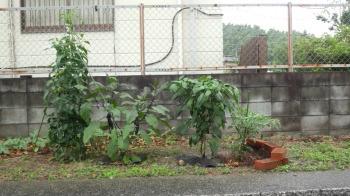 菜園|福岡県筑紫野市のその後