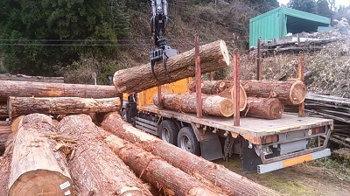 丸太原木を搬入!