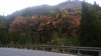 紅葉の秋!