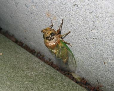 羽化して空蝉から離れた蝉