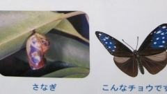 チョウ温室内の説明